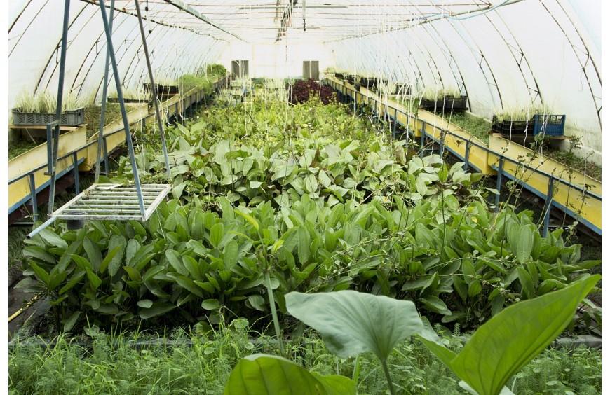 Witajcie w świecie roślin Water And Garden